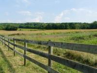 Griggstown Native Grassland